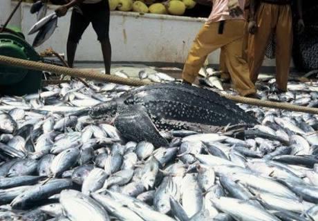 Start fish farming